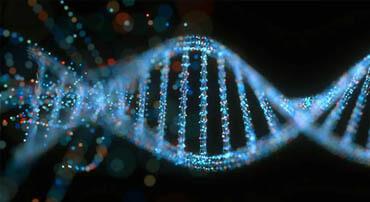 DNA/RNA